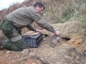 Unter Umständen ist es ratsam, die Kaninchen vor der Umsetzung zu impfen.